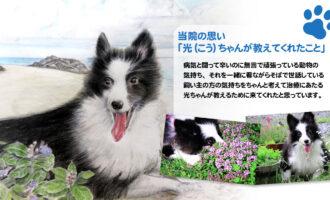鹿児島県 かやま往診専門動物病院 家族の一員である動物たちに時間をかけて診察できるように、もっと寄り添ったケアができるように、往診専門動物病院を開設しました。