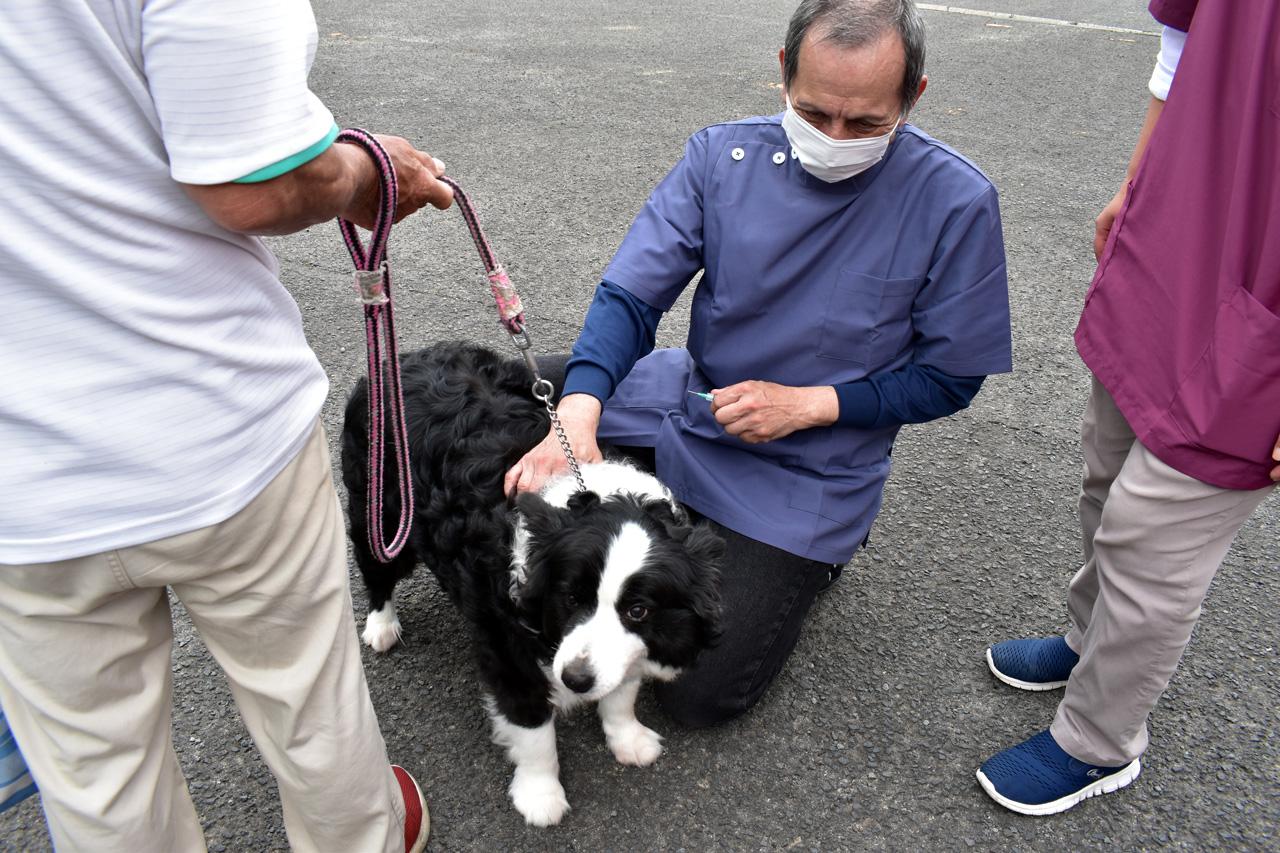 狂犬病接種